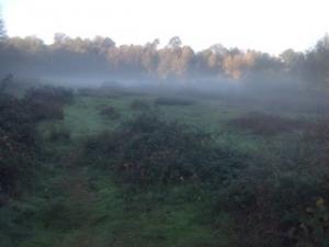 Morning mist over Smeeth Sandpit